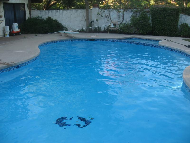 After: New White Swimming Pool Plaster
